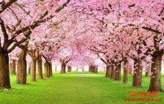 Reddit共同创办人Alexis Ohanian:我们正迎来加密春天