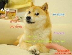 什么是狗狗币?为什么马斯克这么爱